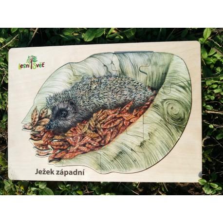 Puzzle velké - kam se schoval ježek západní?
