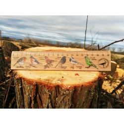 Pravítko dřevěné 20 cm - pěvci
