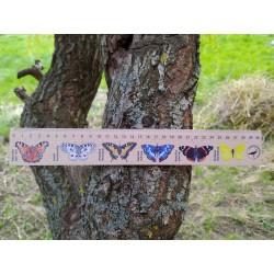 Pravítko dřevěné 30 cm - motýli