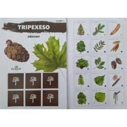 Tripexeso s plody dřevin