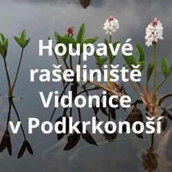 Houpavé rašeliniště Vidonice v Podkrkonoší