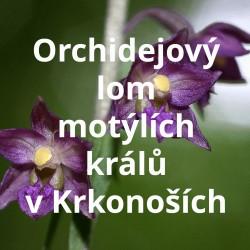 Orchidejový lom v Krkonoších