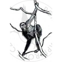 Pohled orangutan