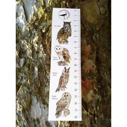 Pravítko papírové 20 cm - sovy