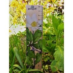 Pravítko dřevěné 20 cm - sasanka