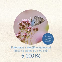 Fotoobraz z Motýlího království