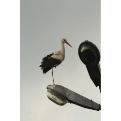 Zpívající ptačí zahrada ve městě