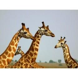 Volání divočiny v srdci Afriky