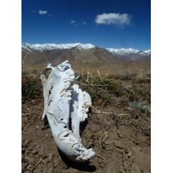 Život na Tibetské plošině i kousek pod ní