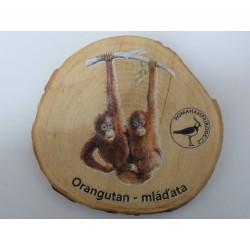 Magnet letokruh orangutani