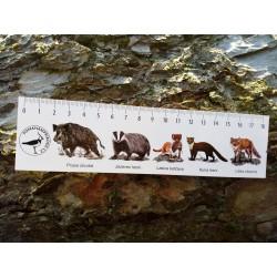 Pravítko papírové 20 cm - savci