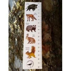 Pravítko papírové 20 cm lesní zvěř