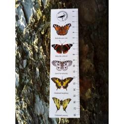Pravítko papírové 20 cm - motýli